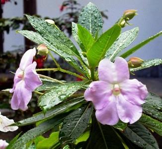 Olor de las flores después de la lluvia