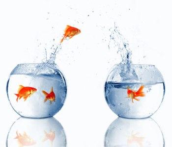 Por qu los peces no se ahogan y respiran en el agua for Peces que no necesitan oxigeno
