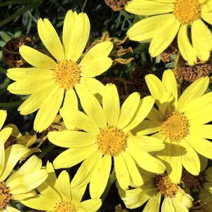 Las flores no pierden el color al exponerse al sol