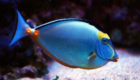 los peces oyen a pesar de carecer de timpanos