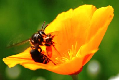 ¿Para qué utilizan las flores su perfume?