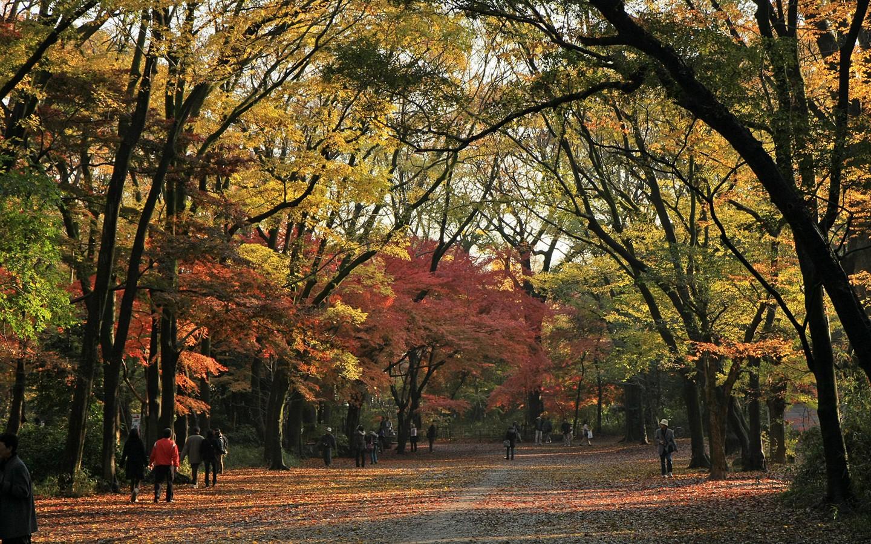 Por qu caen las hojas de los arboles en oto o losporque for Arboles que no pierden sus hojas en otono