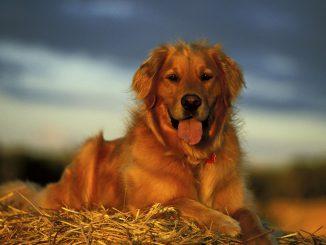 Los perros y la transpiración