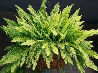 Cómo respira una planta