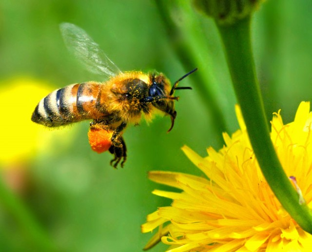 importancia de abejas mariposas ciencia calentamiento global