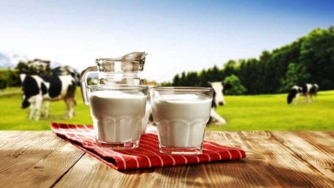 ¿Por qué es blanca la leche de vaca?
