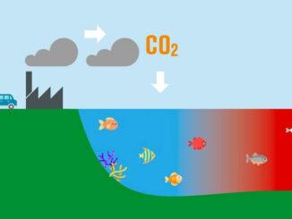 ¿Qué es la acidificación de los océanos?